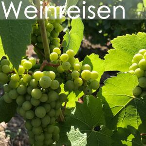 Kachel Leistungen Weinreise