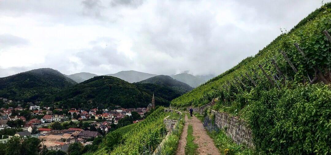 Elsass Alsace Grand Cru Tour Millesimés Alsace CIVA Rangen Steillage Steap Klima Schoffit Zind Humbrecht Riesling