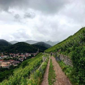Grand Cru-Tour im Elsass