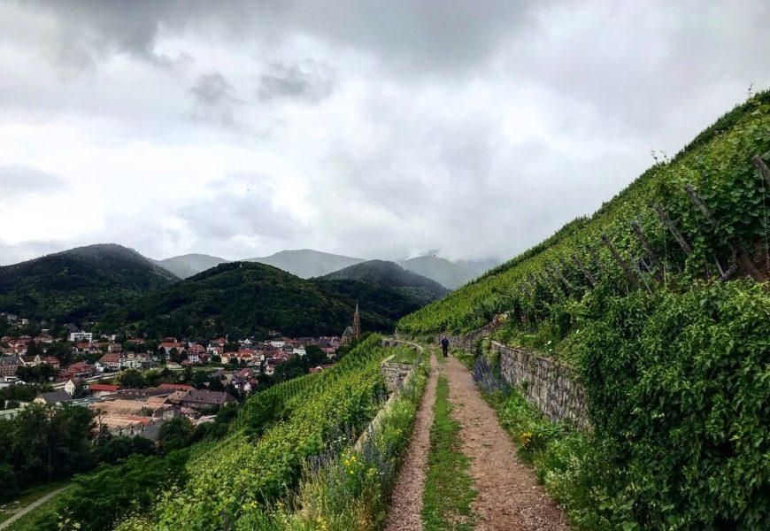 Grand Cru-Tour im Elsass
