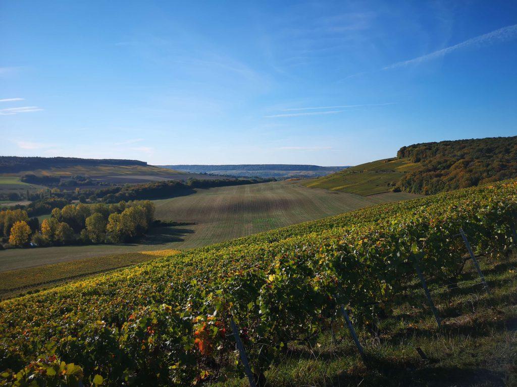 Moussé Fils Cuisles Champagne Cedric Meunier Pinot Vineyard Weinberg Lage