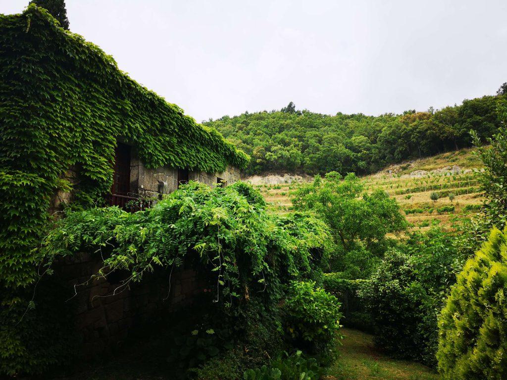 Vinho Verde Great European Wines Porto Covela Quinta Grün Fruchtbar Weinberge Olive